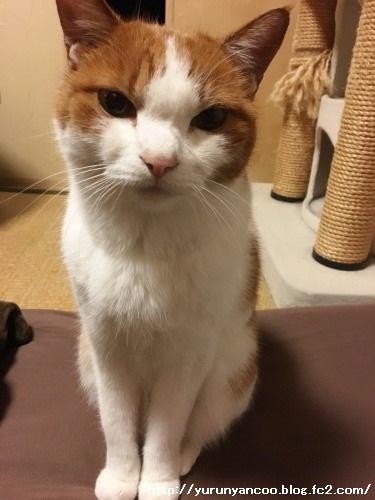 ブログNo.1398(心配性な猫?)9
