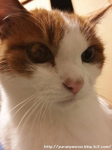ブログNo.1398(心配性な猫?)10