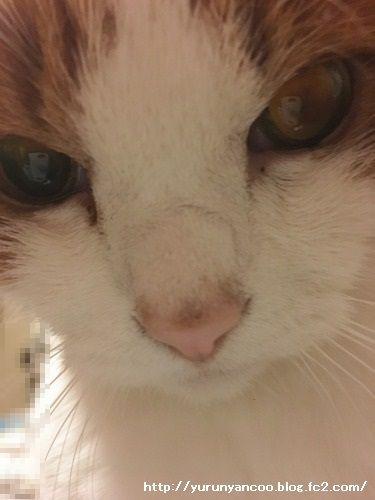 ブログNo.1398(心配性な猫?)11
