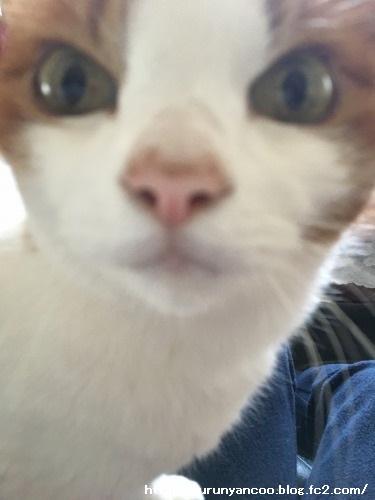 ブログNo.1475心配性な猫&おまけ(横浜中華街)3