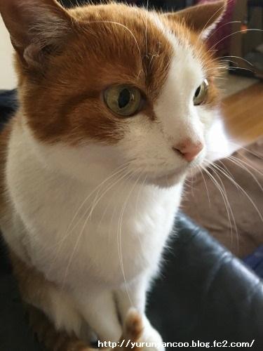 ブログNo.1475心配性な猫&おまけ(横浜中華街)4