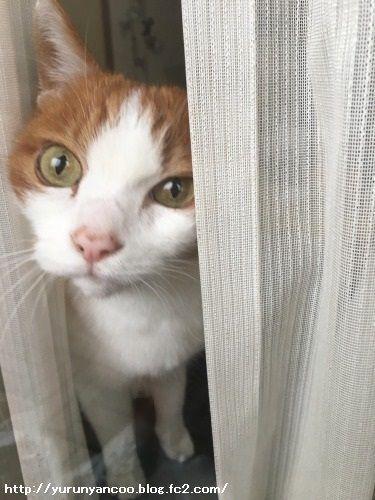 ブログNo.1475心配性な猫&おまけ(横浜中華街)5