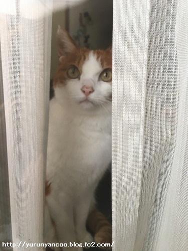 ブログNo.1475心配性な猫&おまけ(横浜中華街)6