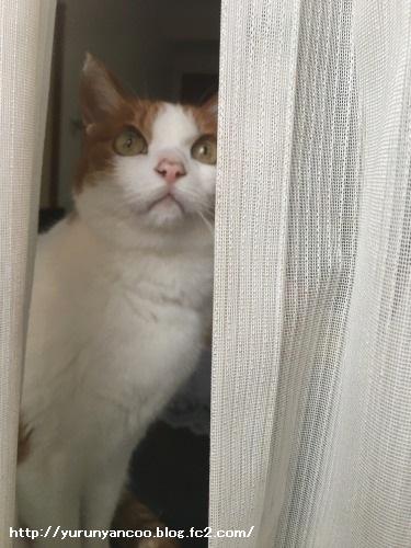 ブログNo.1475心配性な猫&おまけ(横浜中華街)7