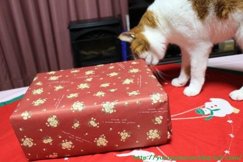 ブログNo.1396(嬉しいクリスマスプレゼント♪)1