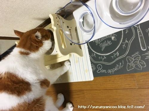 ブログNo.1498(猫食器、今の所微妙)1