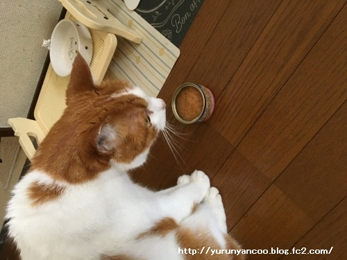 ブログNo.1498(猫食器、今の所微妙)2