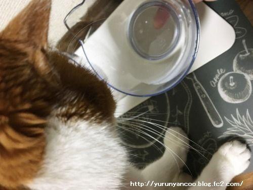 ブログNo.1498(猫食器、今の所微妙)5