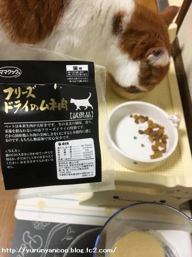 ブログNo.1498(猫食器、今の所微妙)11