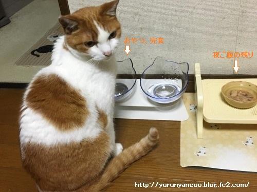 ブログNo.1499(猫食器、その後)7