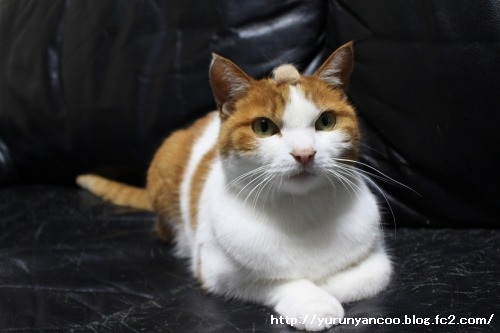 ブログNo.1465(ティッシュに猫の絵)11
