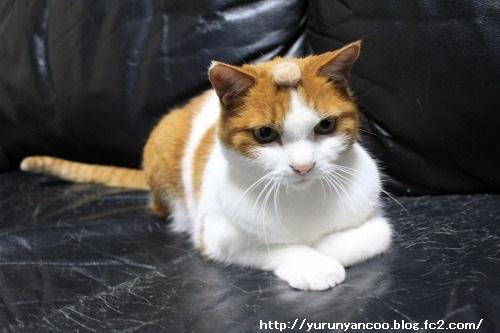 ブログNo.1465(ティッシュに猫の絵)12
