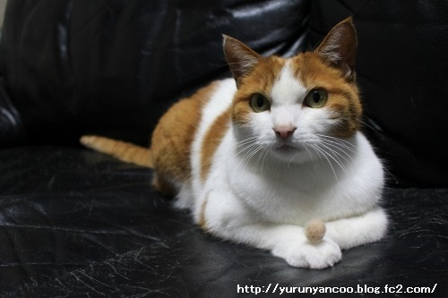 ブログNo.1465(ティッシュに猫の絵)14