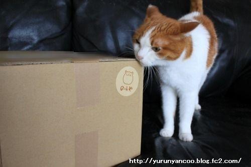 ブログNo.1467(猫丼ぶりがいっぱい♪)1