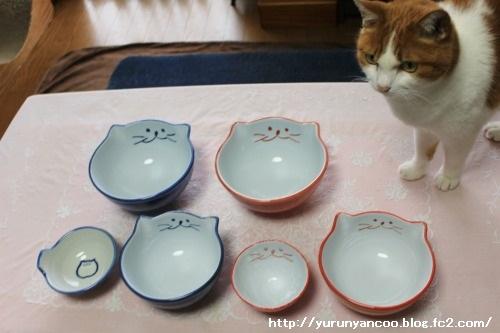 ブログNo.1467(猫丼ぶりがいっぱい♪)4