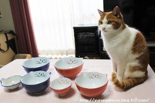ブログNo.1467(猫丼ぶりがいっぱい♪)7