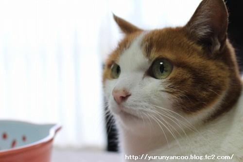 ブログNo.1467(猫丼ぶりがいっぱい♪)8