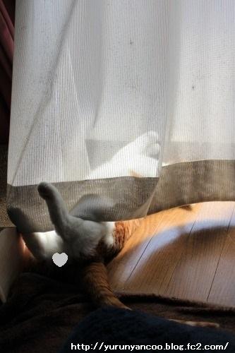 ブログNo.1481コロリン招き猫&おまけ(古河桃まつり)1