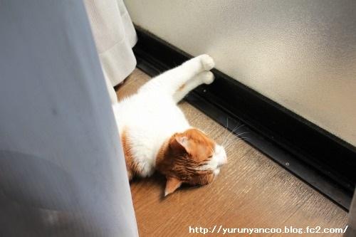 ブログNo.1481コロリン招き猫&おまけ(古河桃まつり)2