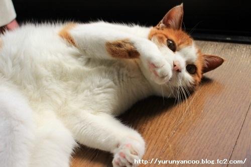 ブログNo.1481コロリン招き猫&おまけ(古河桃まつり)5