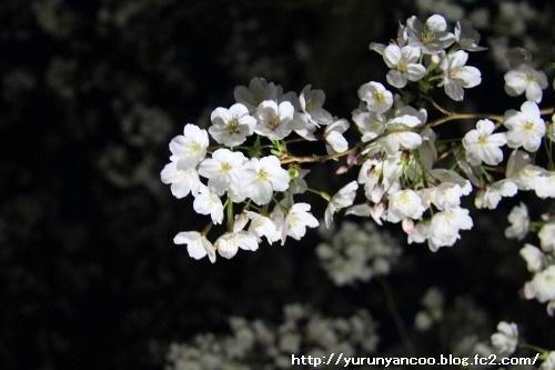 ブログNo.1503サプリメント&おまけ(成田さくらの山公園)11