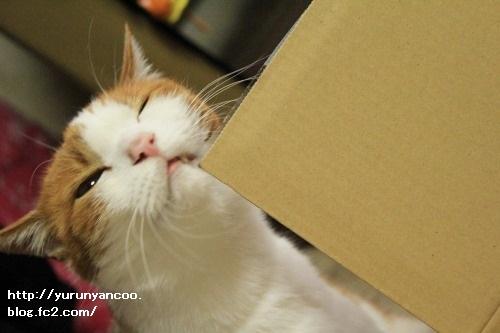 ブログNo.1497(猫用食器、衝動買い!(^_^;))4