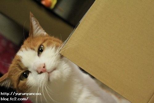 ブログNo.1497(猫用食器、衝動買い!(^_^;))5