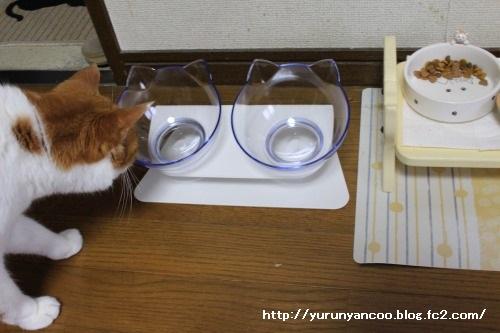 ブログNo.1497(猫用食器、衝動買い!(^_^;))13