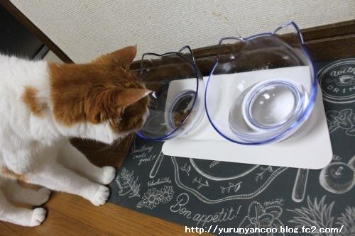 ブログNo.1497(猫用食器、衝動買い!(^_^;))14