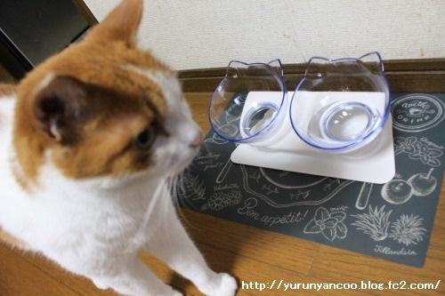 ブログNo.1497(猫用食器、衝動買い!(^_^;))16