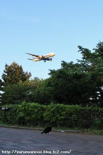 ブログNo.1529 街にゃんこ No.2(城南島海浜公園)14