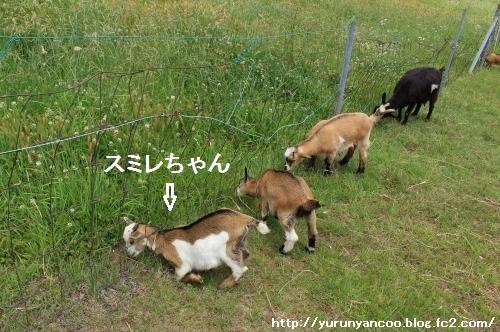 ブログNo.1552潰れ猫&おまけ(ふれあい牧場)9