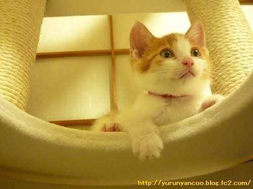 ブログNo.1330お膝猫&おまけ多め(ベビくぅちゃん⑦)5