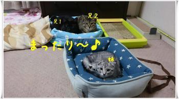 10譛亥ケク縺幃€壻ソ。・悶・・棒convert_20181028015924