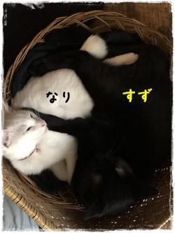 縺ウ繝シ蜷帛穀讌ュ10譛亥ケク縺幃€壻ソ。・托シ点convert_20181028020449