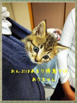 繝ャ繧ケ繧ュ繝・繝シ・托シ斐・・托シ農convert_20181105212956