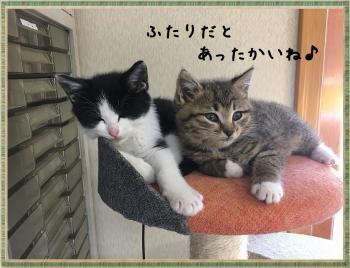 繝ャ繧ケ繧ュ繝・繝シ・托シ輔・・托シ廟convert_20181105213038