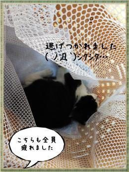 繝ャ繧ケ繧ュ繝・繝シ・偵・・胆convert_20181105212246