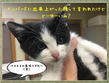 繝ャ繧ケ繧ュ繝・繝シ・輔・・廟convert_20181105212413