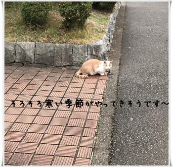 繝溘Ν繧ッ繝・ぅ・托シ狙convert_20181202143049